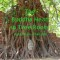 The Buddha Head in Tree Roots Ayutthaya,