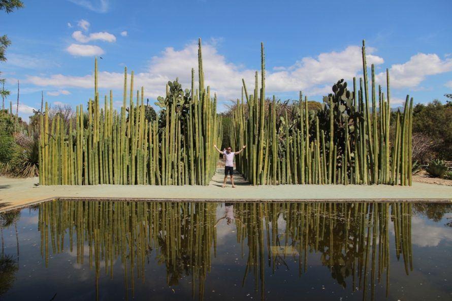oaxaca-cactus-king